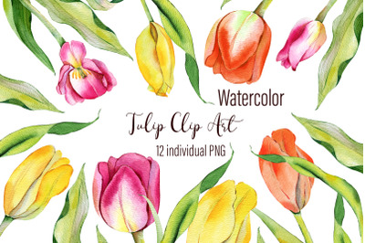 Watercolor Tulips Clipart