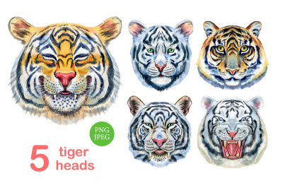 Watercolor tiger portraits