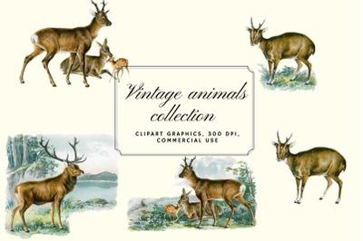 Antique Animal Clipart Set, Vintage Deers Clipart Graphics