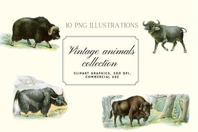Antique Animal Clipart Set, Vintage Bison Illustration