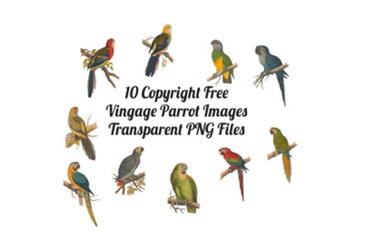 10 Vintage Parrots Transparent Clipart