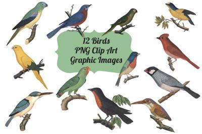 12 Vintage Birds Transparent Clipart