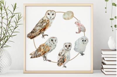 Owl Life Cycle Clip Arts and Print