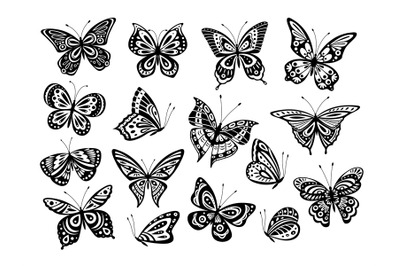 Black butterflies. Drawing butterfly silhouette, nature elements. Gorg