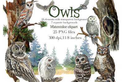 Owls in the forest watercolor clipart, trees, forest background, night