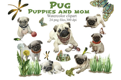 Dogs watercolor clipart. Pug puppies and mom watercolor clip art. Dog,