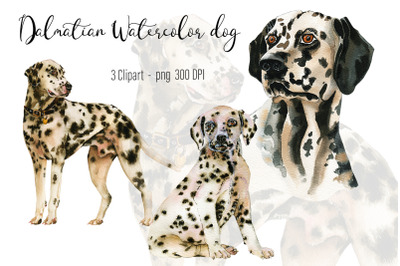 Dalmatian Watercolor dog clipart.