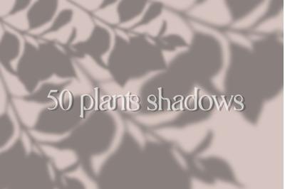 50 plants shadows