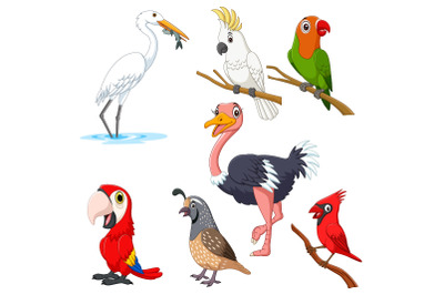 Set of Seven Cartoon Birds Character