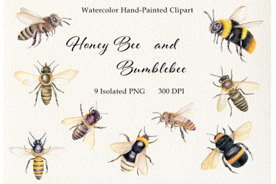 Watercolor honey bee clipart set. Hand painted vintage insects PNG