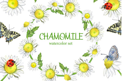 CHAMOMILE watercolor set. Daisy   clipart. Butterflies and flowers