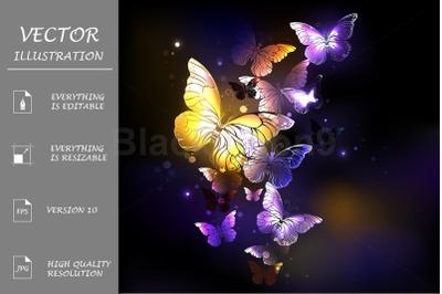 Fabulous Purple Butterflies