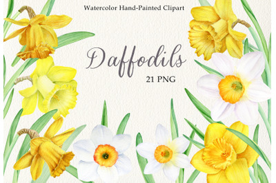 Watercolor daffodils clipart set. Hand painted spring flowers PNG