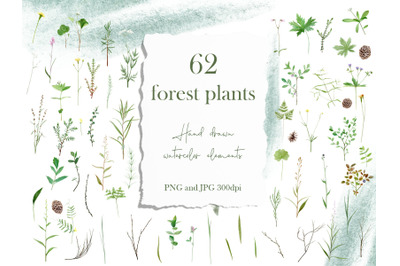 Watercolor Wild Forest Flower Stem Clipart