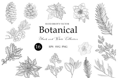Botanical Clipart svg, Floral Leaves, Flowers Chtistmas Decorative