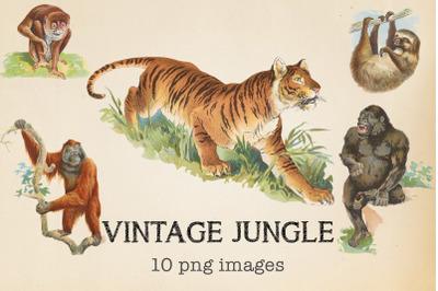 Vintage Jungle Animals