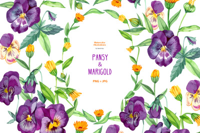 Watercolor pansy and marigold.