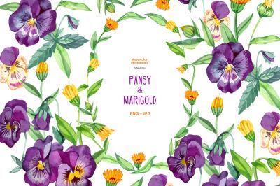 Watercolor pansy and marigold.