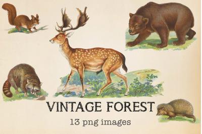 Vintage Forest Animals Clipart