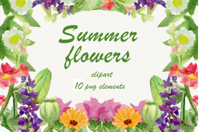 Summer watercolor flowers, mallow