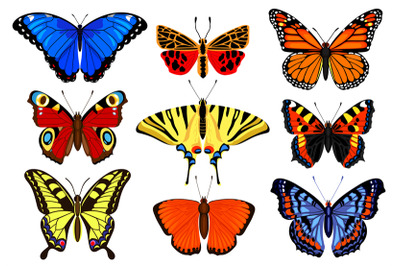 Cartoon butterflies. Flying colorful insects, spring butterfly moth in