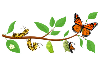 Butterfly life cycle. Cartoon caterpillar insects metamorphosis, eggs,
