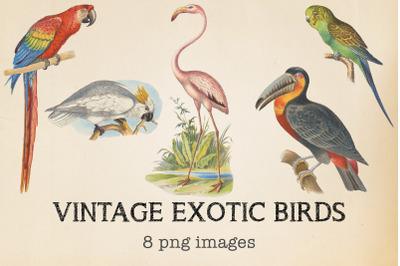 Vintage Exotic Birds