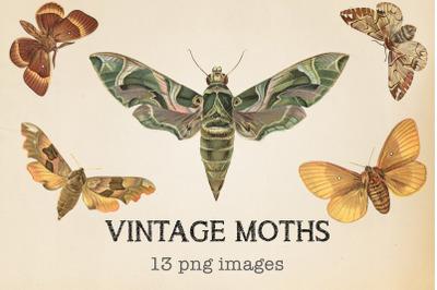 Vintage Moths Clipart