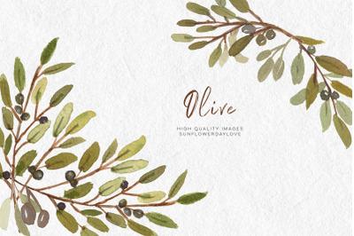 Olive Branch watercolor clip art, Olive botanical leaves illustrations