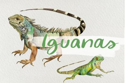 Watercolor Iguanas Clip Art
