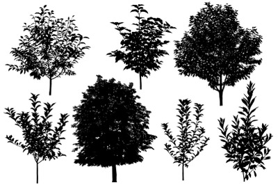 Summer trees silhouettes