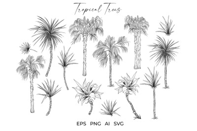 Palm Trees Tropical Plants Vector Sketches