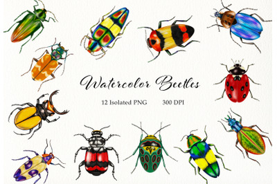 Watercolor Beetles Clipart, Bug, Insects, Bug Catching, Beetles PNG