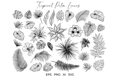 Tropical Palm Leaves and Flowers Vector Sketches