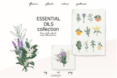 Botanical line art & abstract