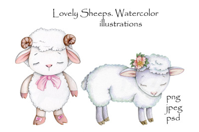 Lovely cute sheeps. Watercolor illustrations.