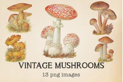 Vintage Mushrooms Clipart