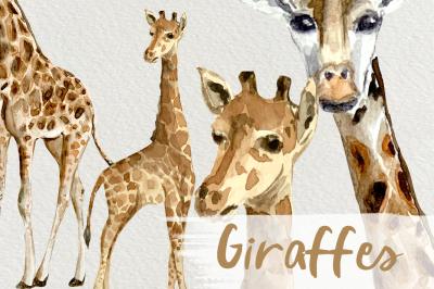 Watercolor Giraffes Clip Arts