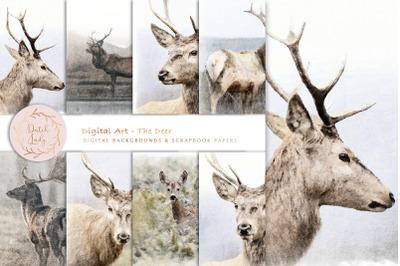 Digital Paintings The Deer