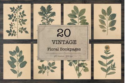 Vintage herbarium, floral images