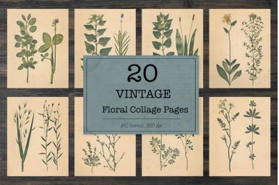 Vintage plants, floral images