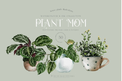 House Plants Illustrations and Patterns Big Collection