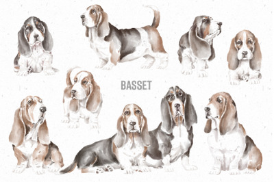 Basset Hound dogs and puppies