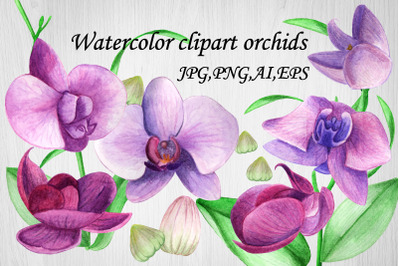 Watercolor Clipart Orchid flower.Summer,Spring.EPS,AI,JPG,PNG