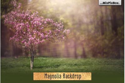 Magnolia Backdrop