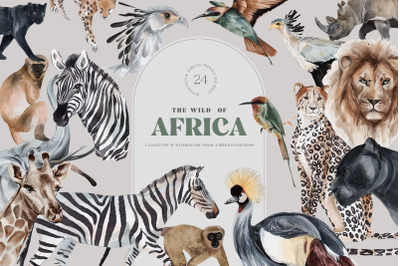 Wild Animals of Africa Illustrations PNG