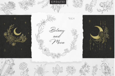 Botany & Moon. Hand Drawn Line Art.
