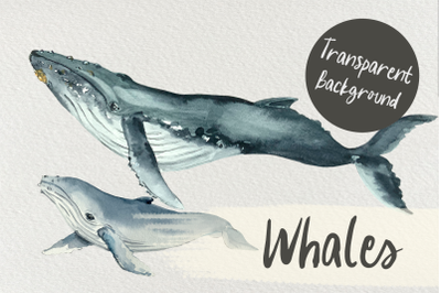 Watercolor Mother and Baby Whale Clip Arts