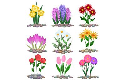 Garden flowers plants on soil