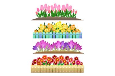 Spring flowers garden isolated